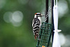 One of our backyard bird friends. Can you name the species and family?
