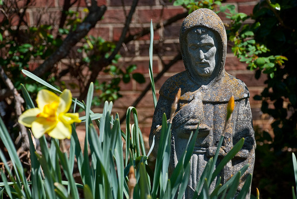 St Francis (Patron Saint of animals) overlooking spring lillies