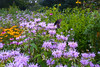 Summer flowers and butterflies on Grandfather Mountain