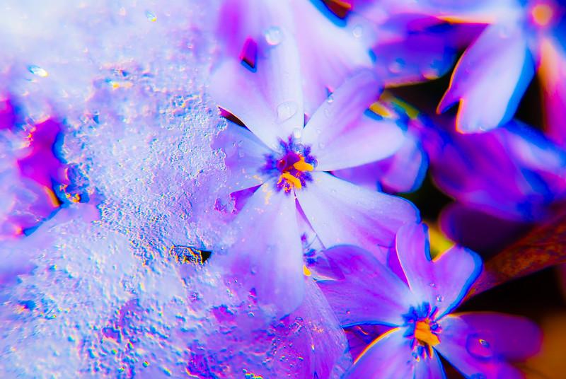 Winters inevitable spring - Floxed