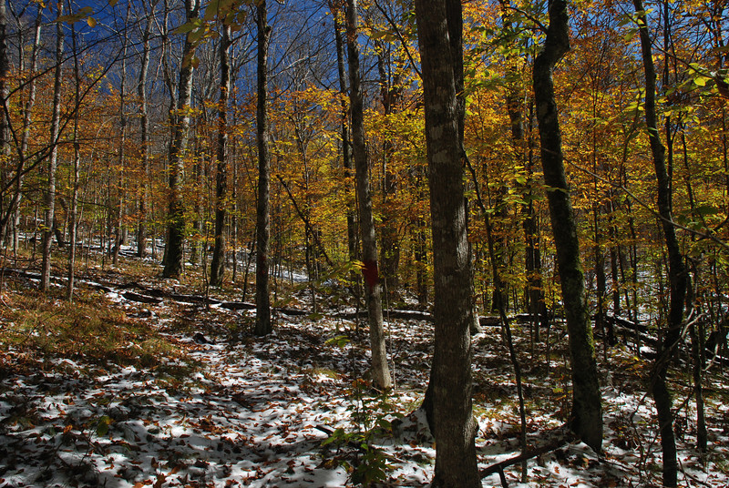 Upper pond creek trail Beech Mountain, NC<br /> I went exploring after a late fall snow. The trail was a bit of a challange to follow even with the occasional red tree markers, do you see one?