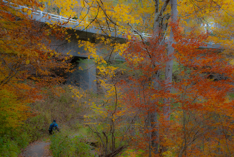 Fall colours at the viaduct