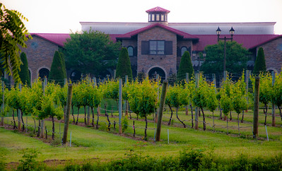 My usual predawn rise took me straight outside to behind the hotel, and down a path to the Childress Vineyard
