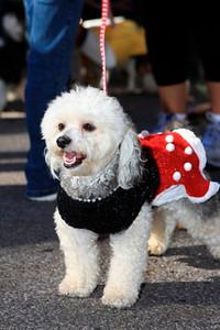 HALLOWEEN DOG PARADE 2009-61