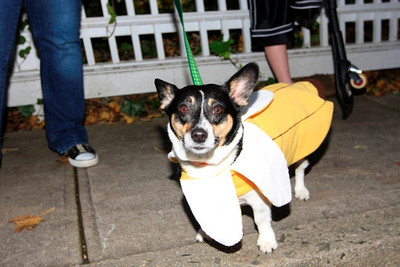 HALLOWEEN DOG PARADE 2009-48