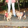 HALLOWEEN DOG PARADE 2009-34
