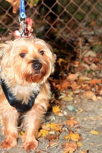 HALLOWEEN DOG PARADE 2009-64