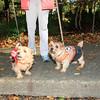 HALLOWEEN DOG PARADE 2009-35