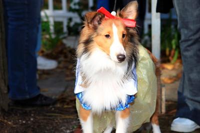 HALLOWEEN DOG PARADE 2009-79