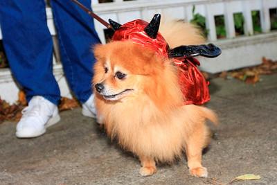 HALLOWEEN DOG PARADE 2009-21