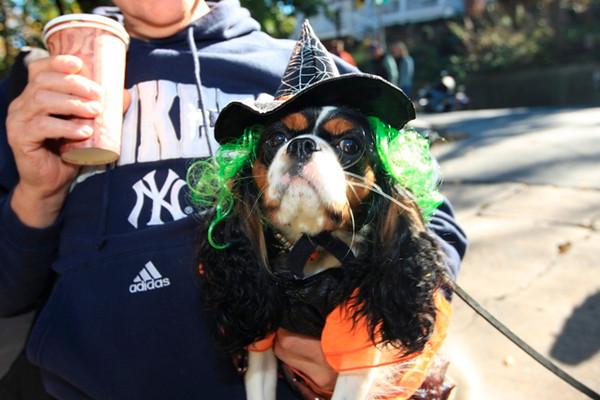 HALLOWEEN DOG PARADE 2009-16