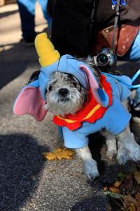 HALLOWEEN DOG PARADE 2009-62