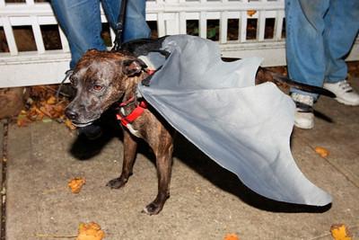 HALLOWEEN DOG PARADE 2009-43