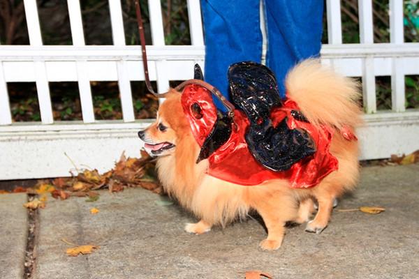 HALLOWEEN DOG PARADE 2009-22
