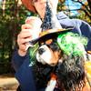 HALLOWEEN DOG PARADE 2009-18