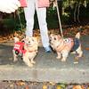 HALLOWEEN DOG PARADE 2009-33