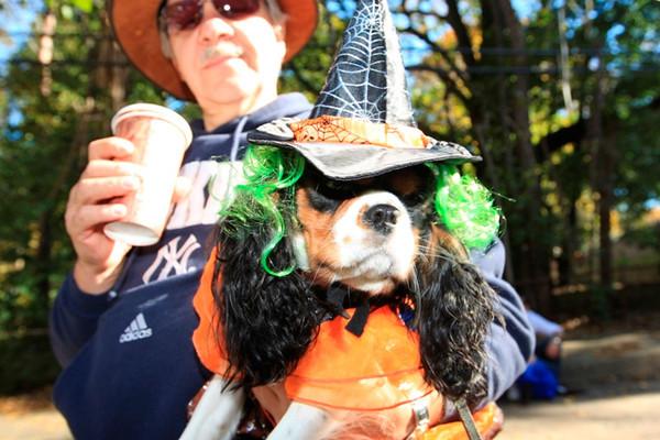 HALLOWEEN DOG PARADE 2009-17