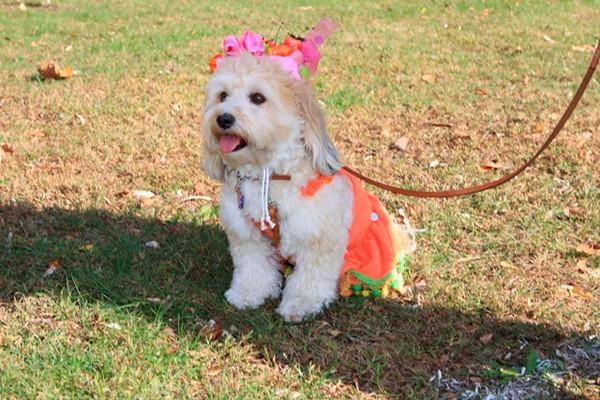 HALLOWEEN DOG PARADE 2009-416