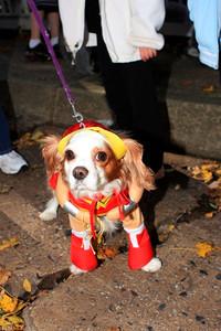 HALLOWEEN DOG PARADE 2009-67