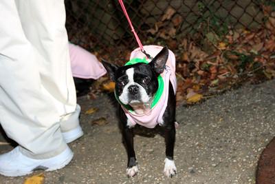 HALLOWEEN DOG PARADE 2009-57