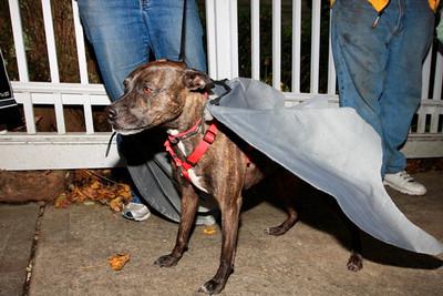 HALLOWEEN DOG PARADE 2009-45
