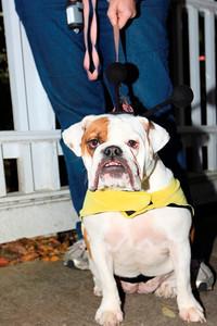 HALLOWEEN DOG PARADE 2009-41