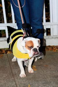 HALLOWEEN DOG PARADE 2009-69