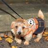 HALLOWEEN DOG PARADE 2009-24