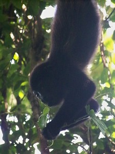 Busy eater. Isla Boca Brava, Panama.