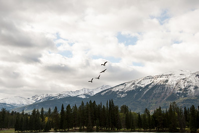 Geese at Lac Beauvert
