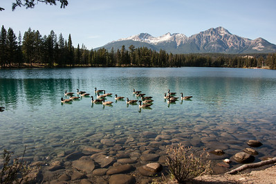 Geese on Lac Beauvert