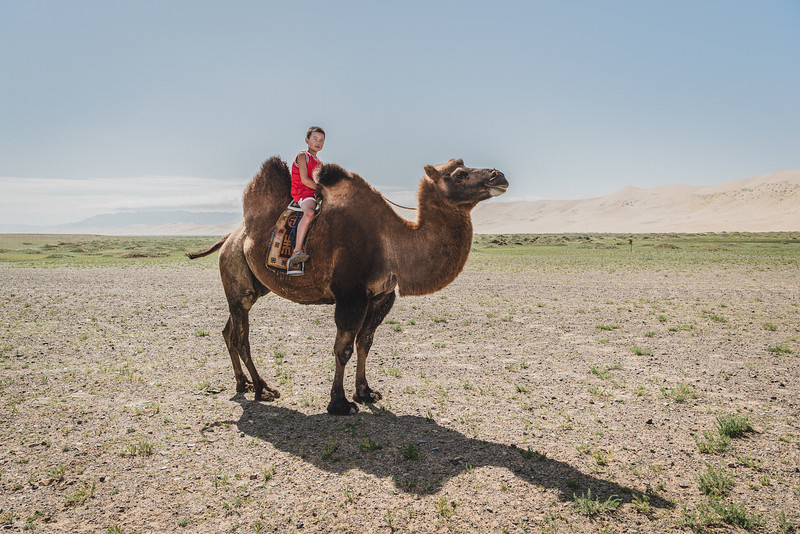 Mongolia, Gobi, 2019. Son of a local herder, rides a camel. Battsetseg transfers the herd of camels to a better place for grazing.