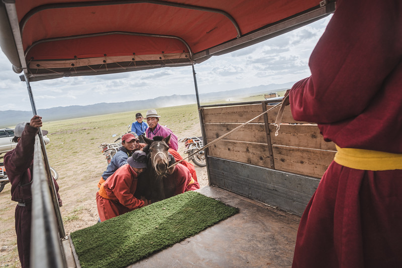 Mongolia, Gobi, 2019. Nomadic shepherds prepare to leave by putting a horse on the truck. Rural life in Mongolia is dependent on nature and the environment. In recent decades the Mongolian climate has changed dramatically, outstripping herders' adaptive capacity. These changes in climate have led to desertification, decreasing availability of water sources and the disappearance of grass on traditional pasture lands.