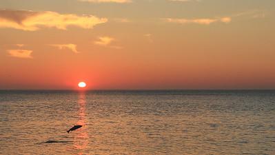 Saumon en vol au soleil levant, baie de Patate, Anticosti