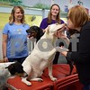 Head Trainer Tammie Cross (from left), Doggy Daycare attendant Lilly Cross and Huckleberry's Pet Parlor owner Jenny Kingren play with dogs at the daycare on Feb. 9. The daycare attendants and dogs competed in this year's Daycare Games, sponsored by The Dog Gurus.