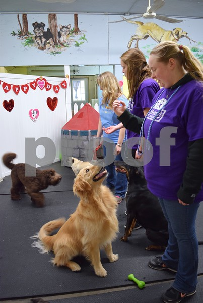 Doggy daycare attendants practice the sit command with dogs at Huckleberry's Pet Parlor, 423 N. Main St. in Sycamore. The Daycare Games competition featured week-long events: recall from Feb. 6 to 10, group sit from Feb. 13 to 17 and gate boundary from Feb. 20 to 24. During the week, the dog handlers have three attempts to achieve their goal.