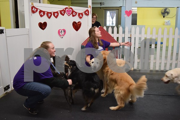 Jenny Kingren, the owner of Huckleberry's Pet Parlor, watches as doggy daycare attendants Emma Valerius (left) and Lilly Haish practice the recall command, by calling the dogs' names and having them come. Throughout February, the parlor competed in the Daycare Games, sponsored by The Dog Gurus.