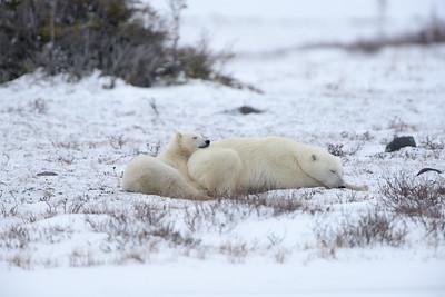 Polar Snuggle
