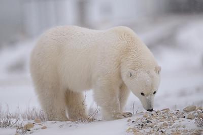Polar Whiff