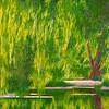 160523-072-24x30 Weeping Willows, Arboretum, Ottawa Experimental Farm