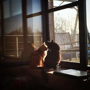 Otis & Louie