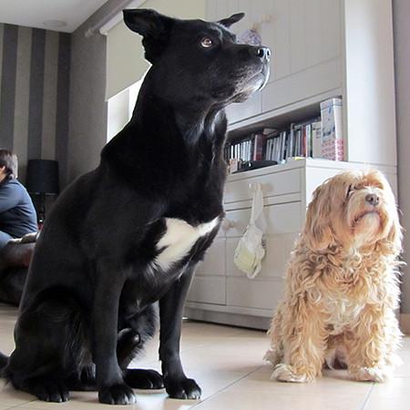 Bosco & Zocki