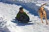The dog versus sled race