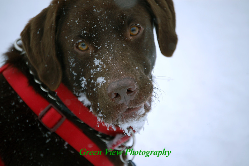 Snowy Face -- Photo selected by Crate and Barrel to be in their Jan/Feb catalog....