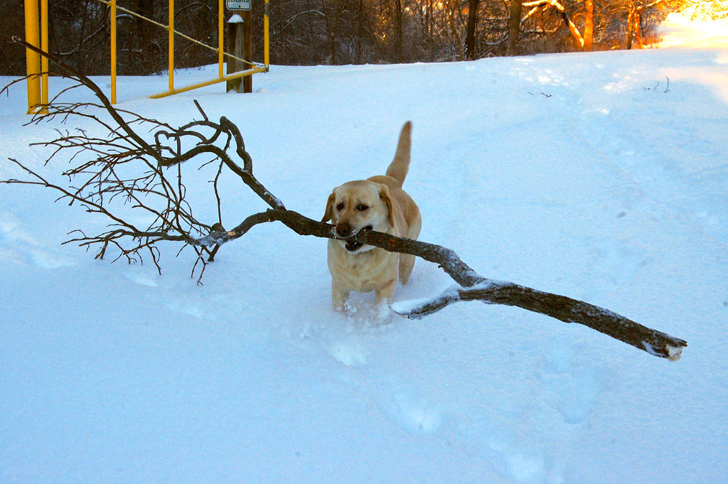 Bring a stick not the whole branch!