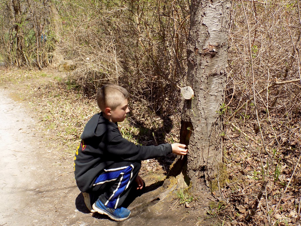 Finding Fairy Houses