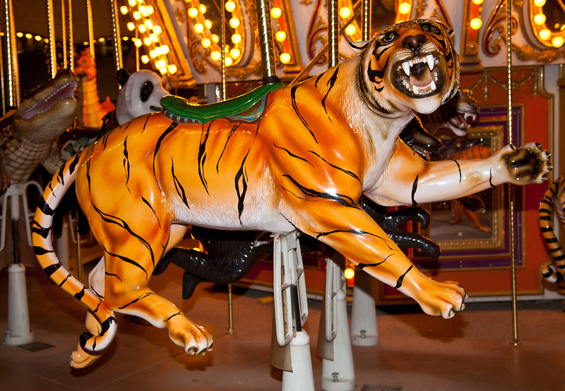 A tiger on the carousel at the Phoenix Zoo