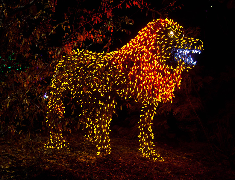 This ferocious lion was guarding the 2011 Phoenix Zoolights.
