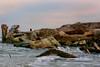 'Fury'<br /> New Smyrna Beach, FL after hurricane Charlie