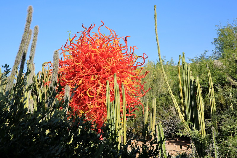 Chihuly and Cacti (C) 2014